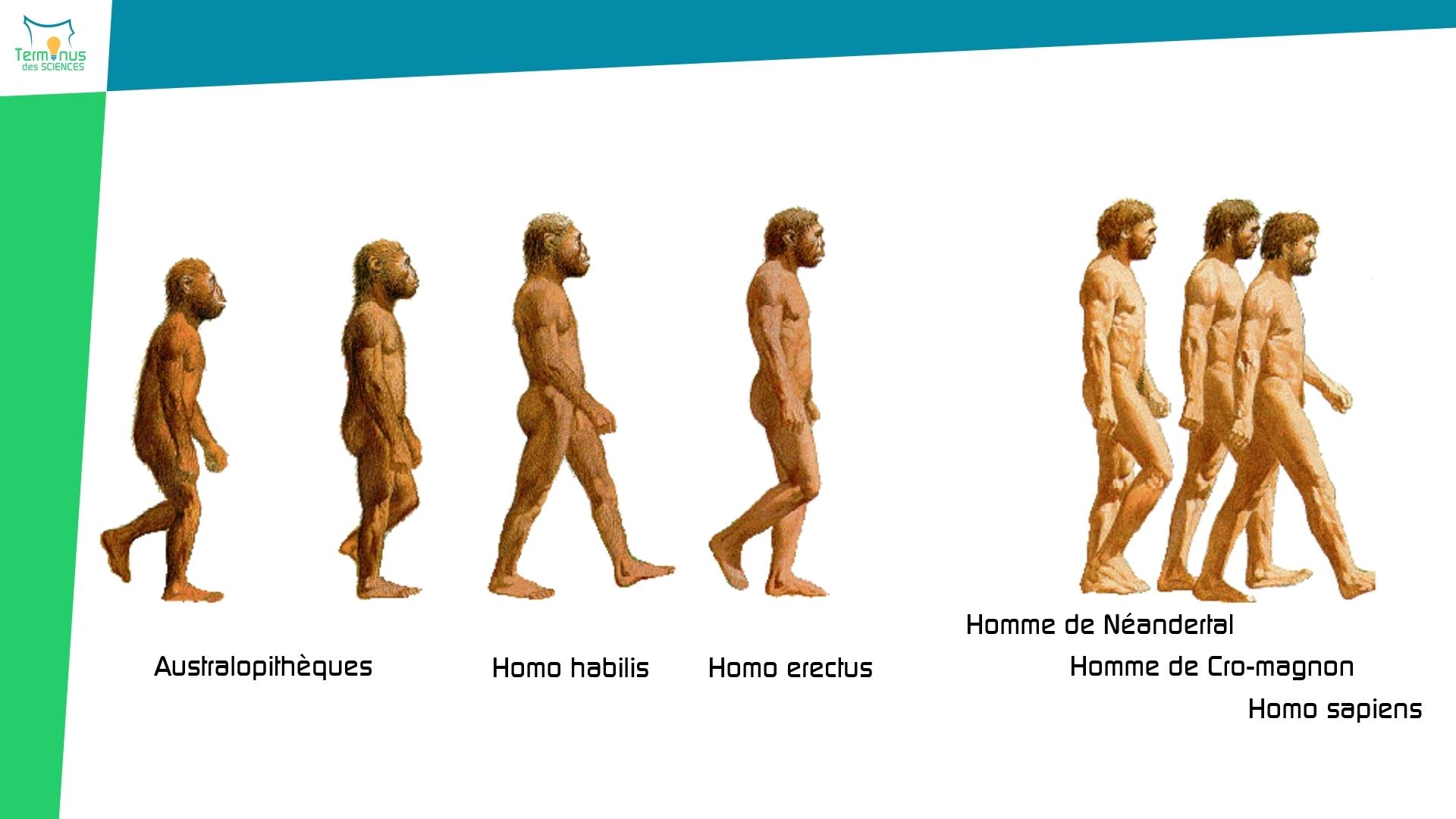 Read more about the article [Des restes d'hommes de Neandertal découverts en Italie]