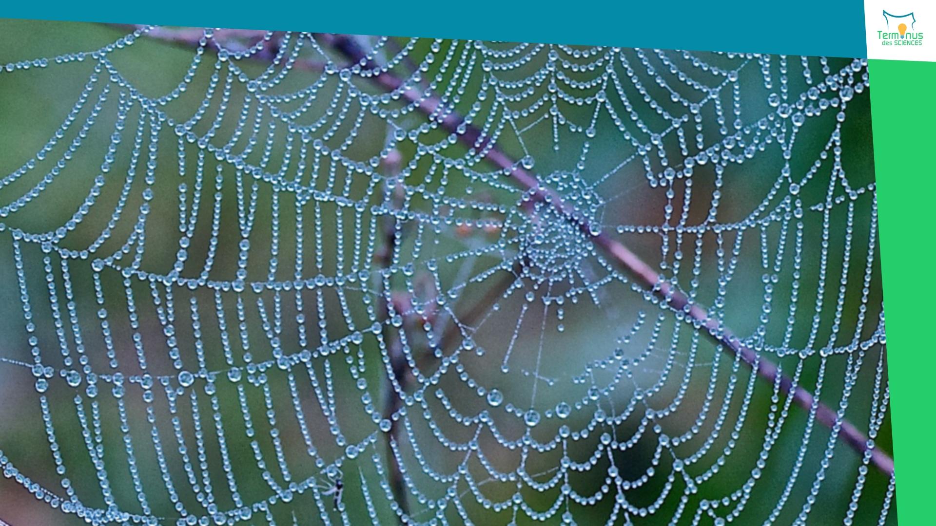 Read more about the article [Une fibre artificielle plus résistante que la toile d'araignée]