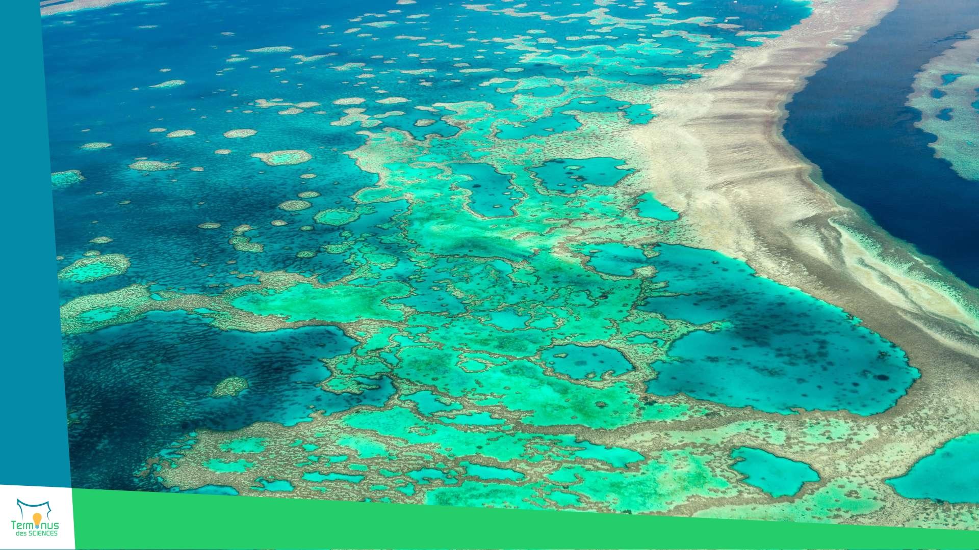 Read more about the article [La Grande Barrière de corail menacée]